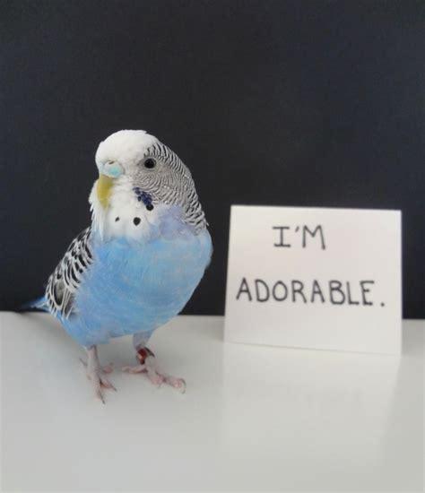 hilarious bird shaming    dont
