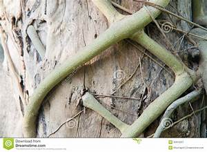 Closed, Up, Parasite, Root, Kill, Plant, Of, Tree, Royalty, Free