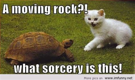 Hilarious Animal Memes - funny animal wednesday quotes quotesgram