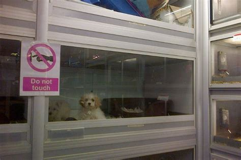 pet shop puppy sales   banned  animal charities