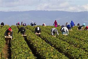 Female Farmworkers And Rape: Sexual Assault And Harassment ...