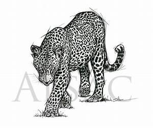 Dessin Jaguar Facile : hunting leopard dessin l 39 encre disponible st phane alsac ~ Maxctalentgroup.com Avis de Voitures