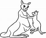 Kangaroo Coloring Pages Outline Mother Printable Clipart Animal Drawing Kangaroos Clip Books Kangoroo Boxing Results sketch template