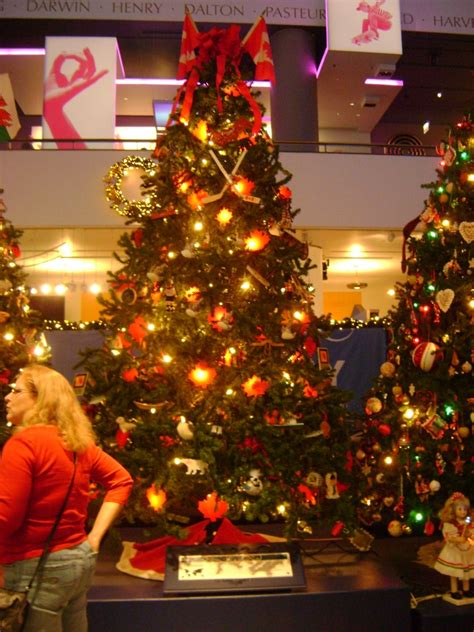 more chicago christmas trees the babuk report