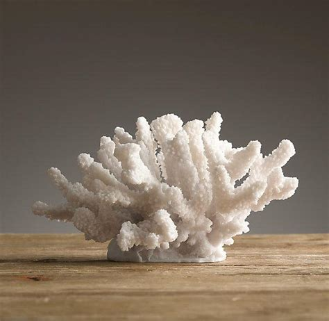 white cast branch coral specimen