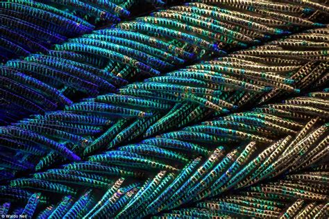 Photographer Waldo Nell Creates Amazing Close-ups Of