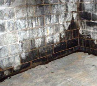 How To Get Rid Of Black Mold In Basement  Tips To Remove