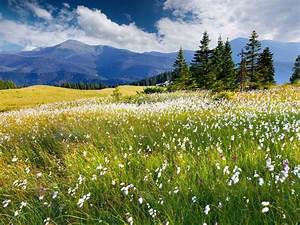 Field Of Grass And Mountains Plants With White Flowers