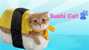 sushi cat 1 sushi cat 2