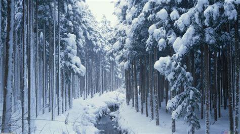 Tapete Für Türen by Die 55 Besten Hintergrundbilder Mit Weihnachten Und Winter