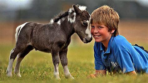 miniature horses pets expensive horse