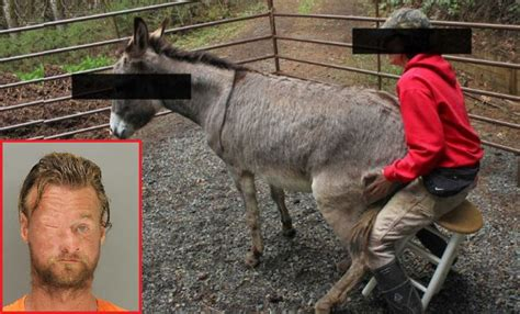 man  admitted donkey charge demands    jail