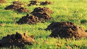 Löcher Im Garten : l cher im rasen und im gartenboden welches tier buddelt da ~ Frokenaadalensverden.com Haus und Dekorationen