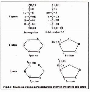 Molecular Structure of Carbohydrates (With Diagram)
