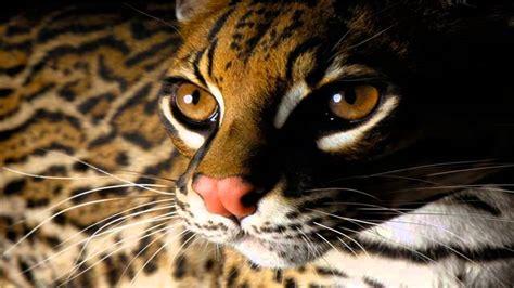 beautiful animals cool set  wild animal wallpapers