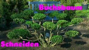 Buchsbaum Schneiden Formen : buchsbaum buxus boxwood neu gestalten re style 2 youtube ~ A.2002-acura-tl-radio.info Haus und Dekorationen