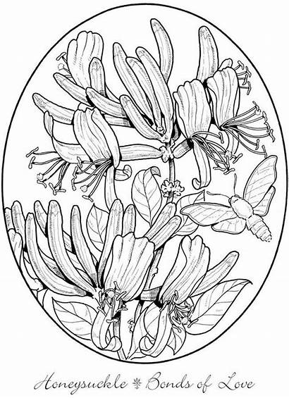 Coloring Flowers Dover Welcome Haven Creative Publications