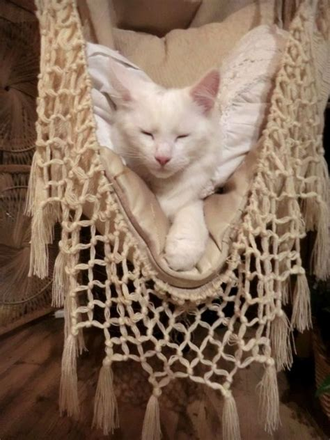 Crochet Cat Hammock by 302 Best Restful Places Images On Beautiful
