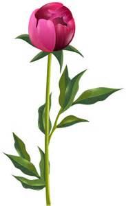 Peonies Flower Clip Art