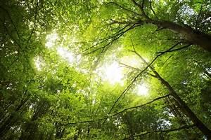 Warum Ist Die Sonne Gelb : warum ist der wald gr n die lichtweberin ~ A.2002-acura-tl-radio.info Haus und Dekorationen