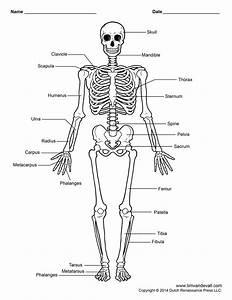 Free Printable Human Skeleton Worksheet For Students And
