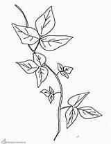 Plantas Colorir Ivy Poison Colorear Imprimir Pintar Coloring Plant Template Sketch Colorare Disegni Edera Dibujar Desenhos Tattoo Kleurplaat Planten Erba sketch template