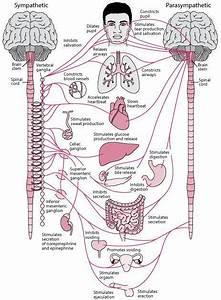 Anatomy In 2020