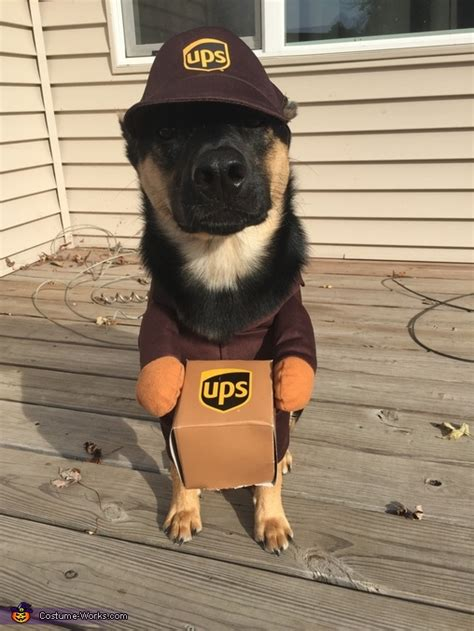 wonderful news   facebook page  ups drivers  post pics   dogs