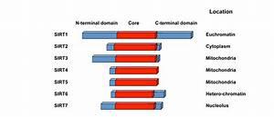 Mammalian Sirtuins And Energy Metabolism
