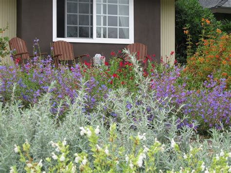 best plants for xeriscaping plants for xeriscaping landscaping network