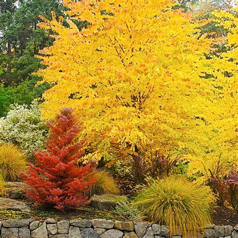 what to plant in the fall fall on pinterest fall decorating fall porches and white pumpkins