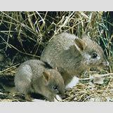 Images Of Land Animals   500 x 399 jpeg 73kB