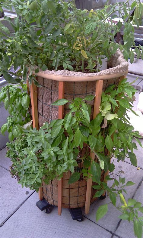 75 Best Phytopod Images On Pinterest  Basil, Container