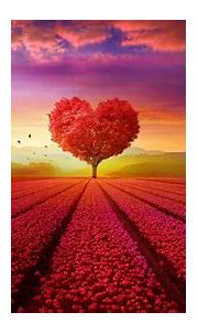 Heart tree Landscape 4K Wallpapers   HD Wallpapers   ID #25145