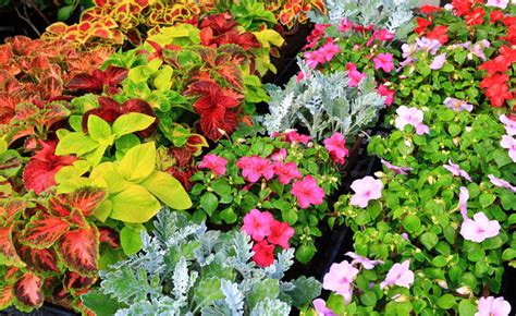 nursery flower sales stock photo image  home farmer