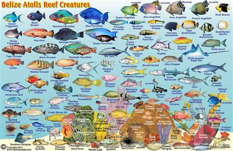 belize maps divefish id cards