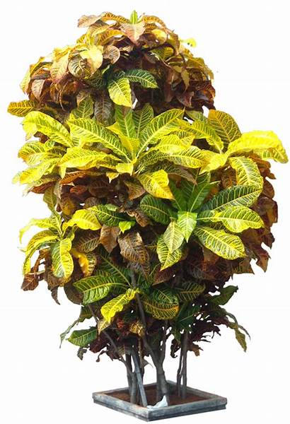 Tree Plant Tropical Plants Garden Croton Codiaeum