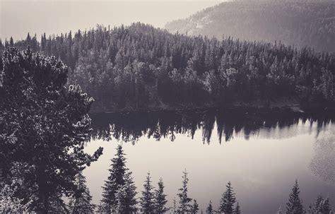 image sea black  white nature forest monochrome