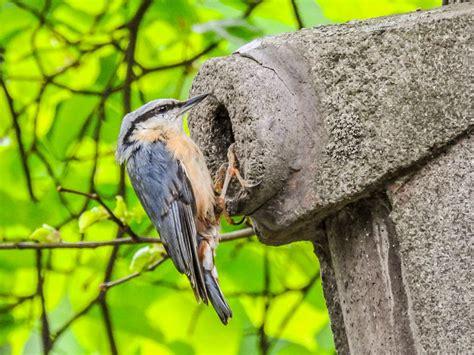 Vogelwelt Im Eigenen Garten Kleiber by Amsel Bis Zilpzalp Faszinierende Einblicke In