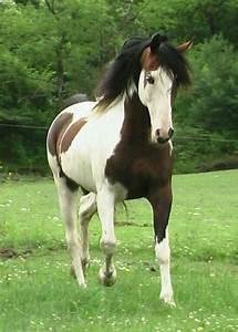 Schöne Einhorn Bilder : 597 besten pferde und einhorn bilder auf pinterest sch ne pferde tierbilder und esel ~ Frokenaadalensverden.com Haus und Dekorationen