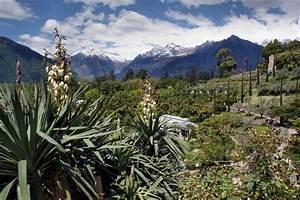 Yucca Palme Garten : yucca palmenarten die sch nsten sorten der palmlilie ~ Lizthompson.info Haus und Dekorationen