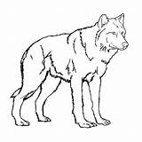 Coloring Wolf Pages Baby Print Printable Colouring Popular sketch template