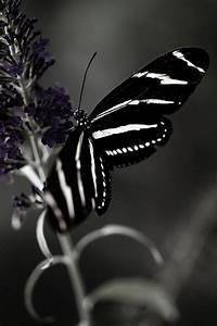 Dreamy Black and White Butterfly Photography Art