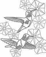 Coloring Morning Humming Birds Pages Hummingbirds Glory Glories Hummingbird Sheets Ruby Door Scarlet Macaw Coloringpage Template sketch template