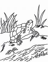 Coloring Pages Turtle Box Grass Reference Printable Getdrawings Today Animals Samanthasbell sketch template
