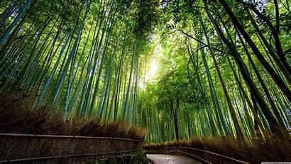 Bamboo Desktop Jungle 4k Wallpapers Ultra Backgrounds