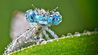 Dragonfly Wallpapers Water Macro Insect Backgrounds Droplets