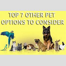 Top 7 Other Pet Options To Consider  Horsefield Tortoise