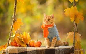 Autumn Cat Desktop Wallpaper