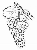 Grapes Coloring Pages Grape Drawing Vine Printable Uva Line Da Purple Preschool Colorare Disegno Template Gratis Disegni Stampare Fruits Supercoloring sketch template
